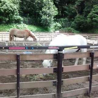 Yoyogi Pony Park