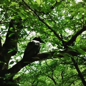 Crow in Yoyogi park