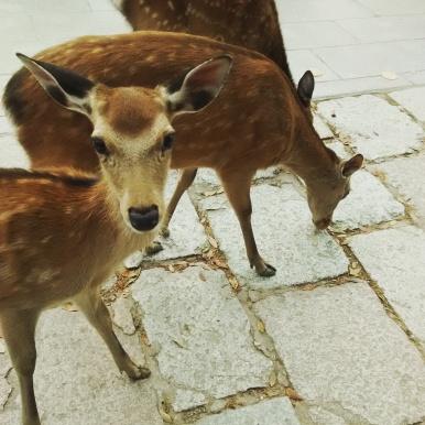 More Nara Park deer