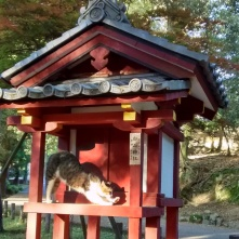 A shrine cat stretching